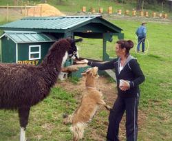 Animals-&-Me